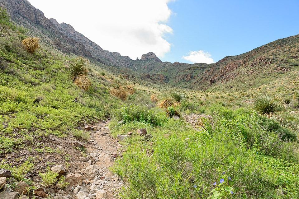 Green Landscape in El Paso